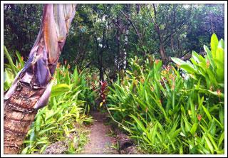 Garden Of Eden Maui Road To Hana Attractions