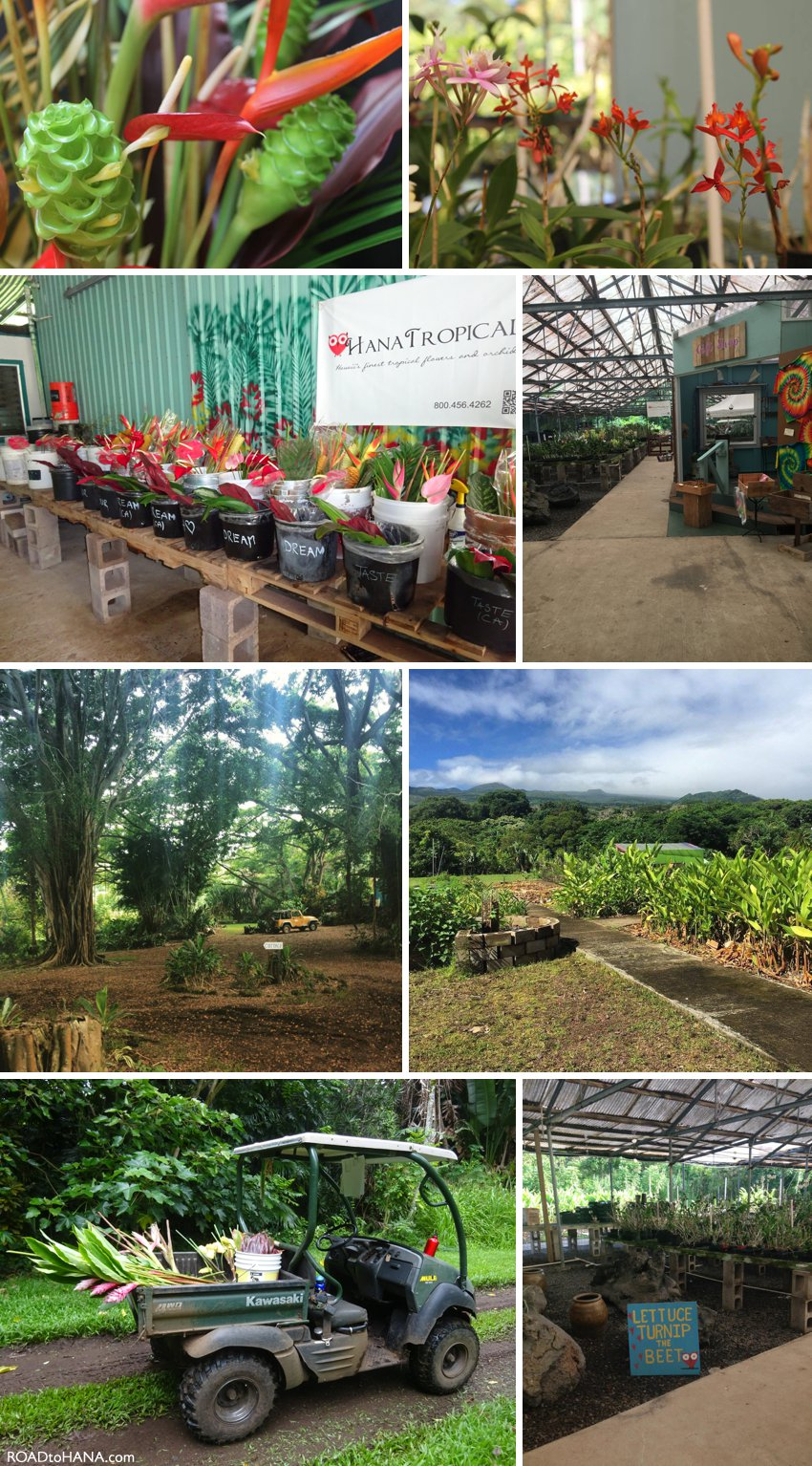 Hana Tropicals Farm
