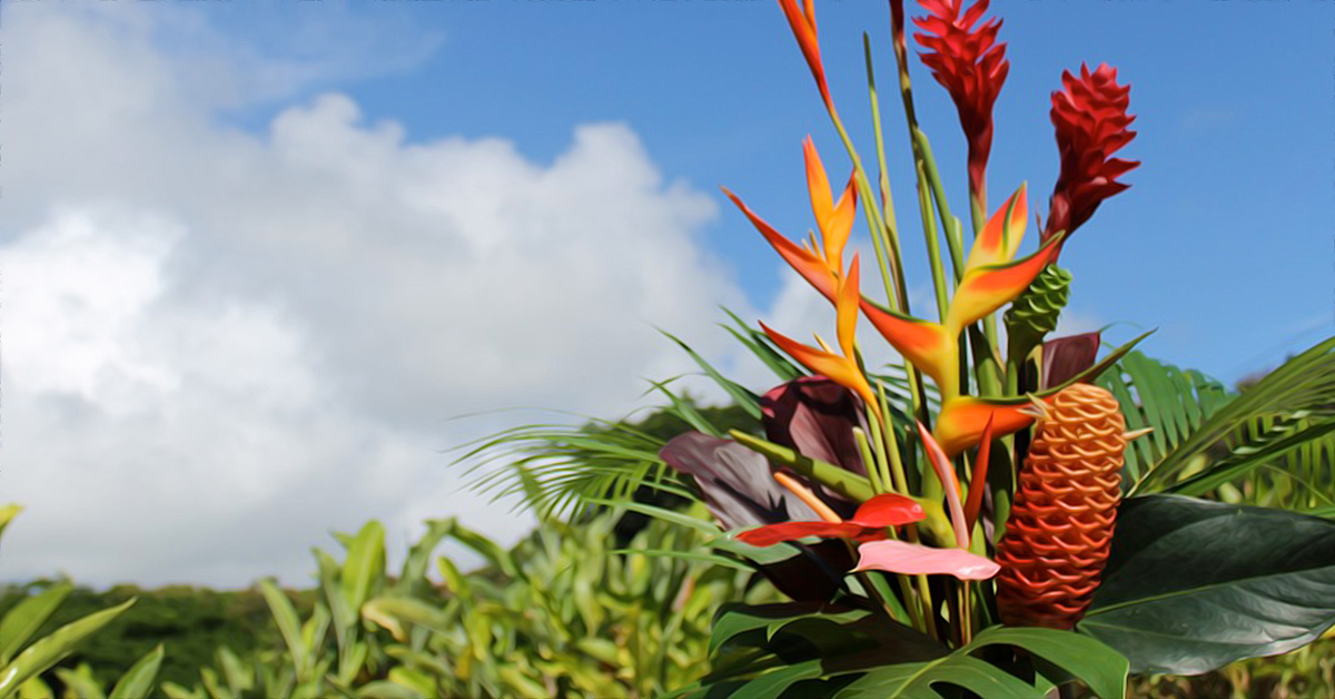 Hana tropicals